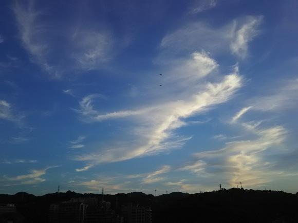 笹の露と雲_b0299052_19284884.jpg