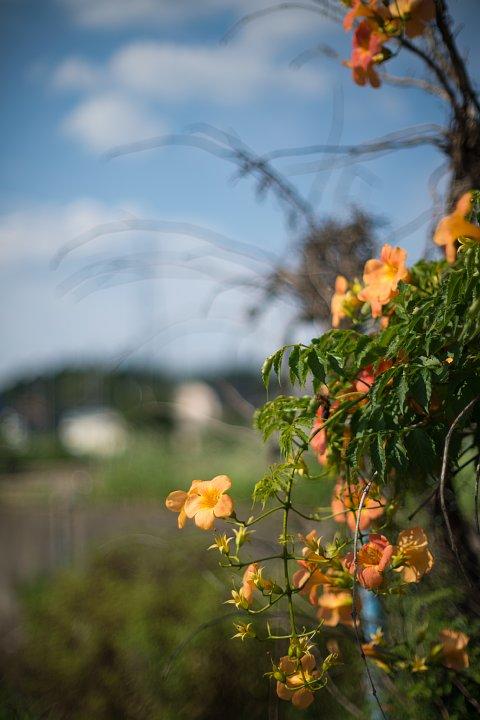 涼しさ皆無、とっても暑苦しい真夏の花_d0353489_22284687.jpg