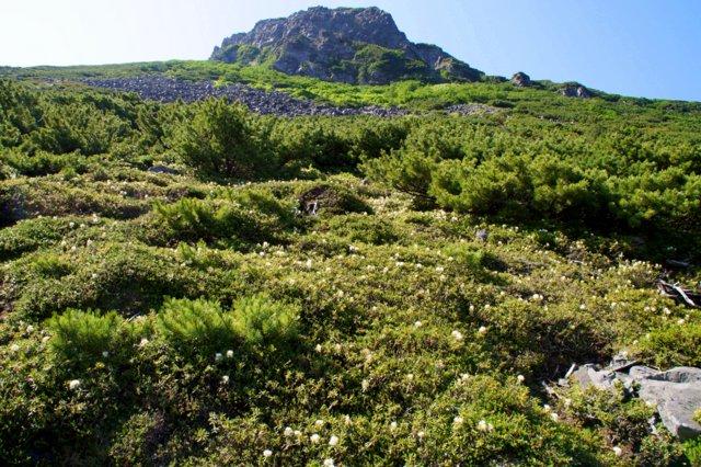 2017年7月13日(木) 富良野岳(標高1912m)~三峰山(1866m)~上富良野岳(1893m)_a0345007_1952484.jpg