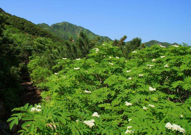 2017年7月13日(木) 富良野岳(標高1912m)~三峰山(1866m)~上富良野岳(1893m)_a0345007_19582853.jpg