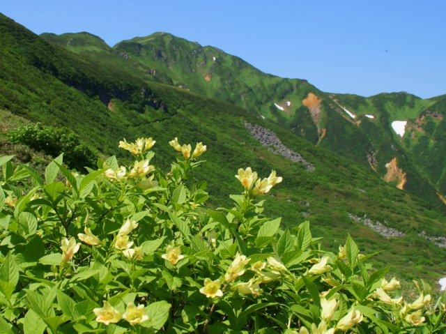 2017年7月13日(木) 富良野岳(標高1912m)~三峰山(1866m)~上富良野岳(1893m)_a0345007_19584970.jpg