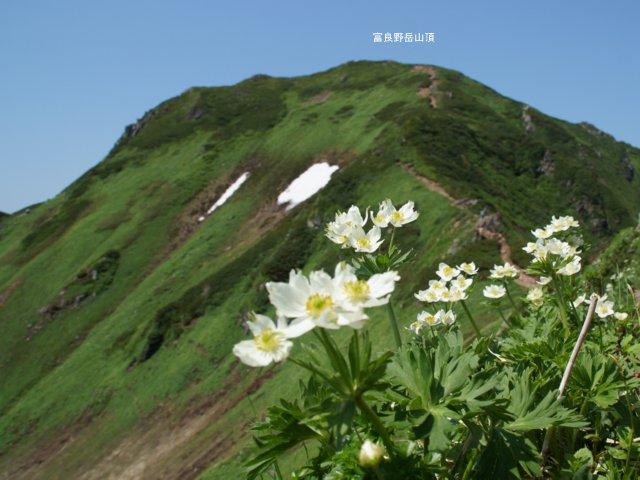 2017年7月13日(木) 富良野岳(標高1912m)~三峰山(1866m)~上富良野岳(1893m)_a0345007_2063987.jpg