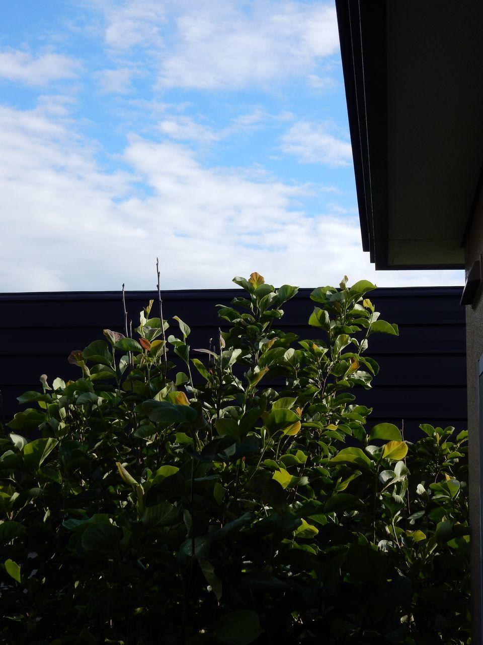 異常高温の次にやってきた豪雨_c0025115_23173965.jpg