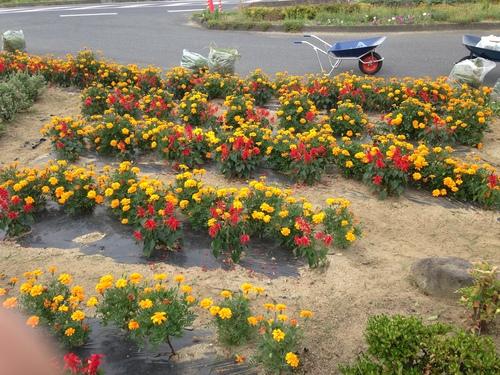 『花植え・ソフトボール大会』_f0259324_1233723.jpg