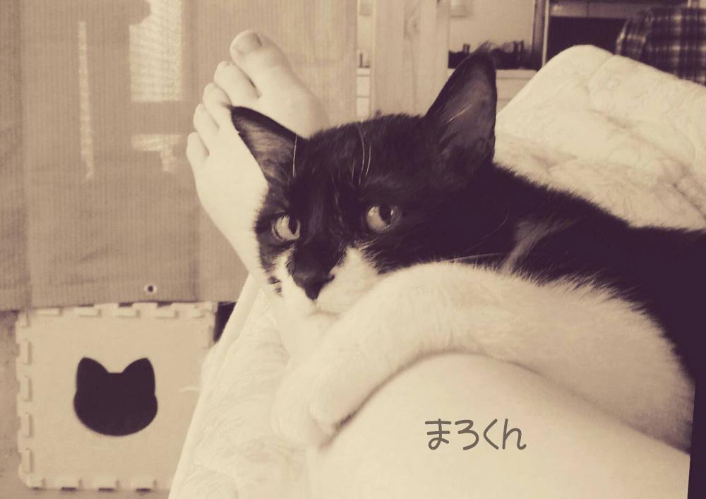 ネコも暑い夏_f0152939_05473284.jpg