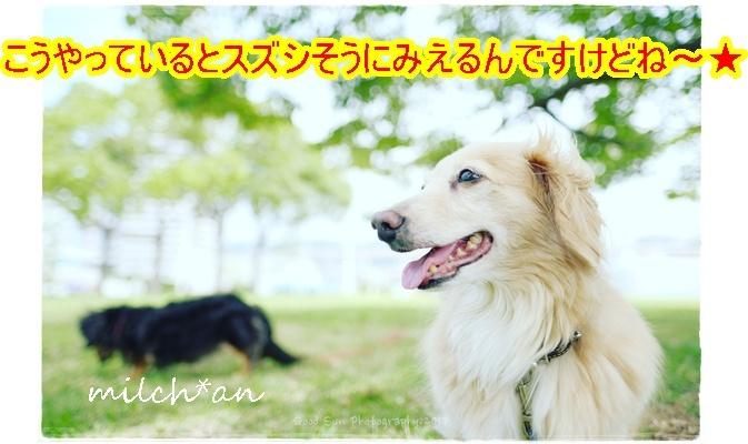 b0115642_17314222.jpg
