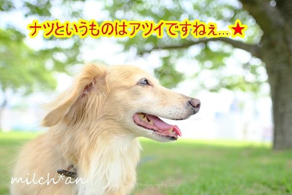 b0115642_17314335.jpg