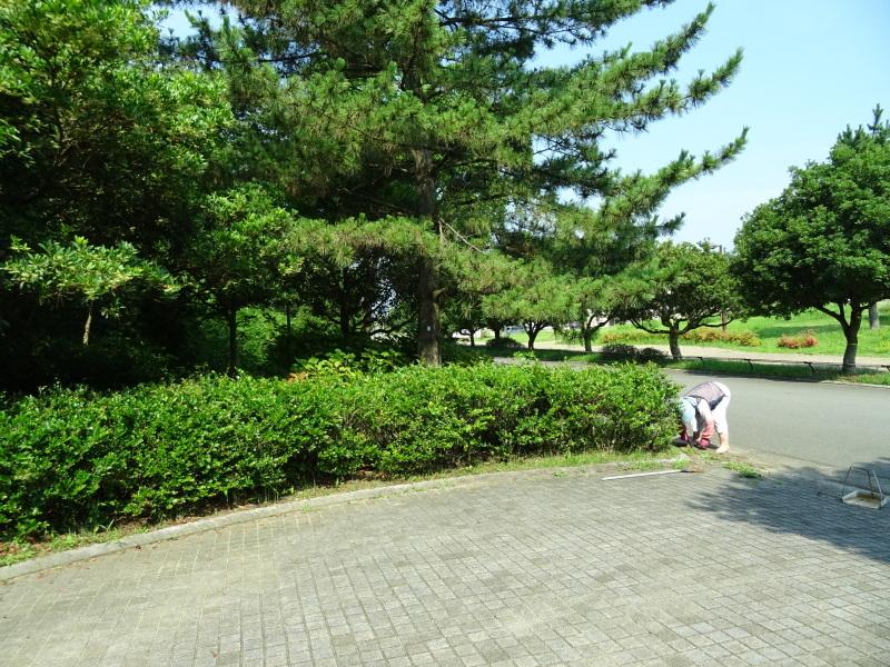 猛暑日は作業にならない・・・うみべの森_c0108460_16361663.jpg