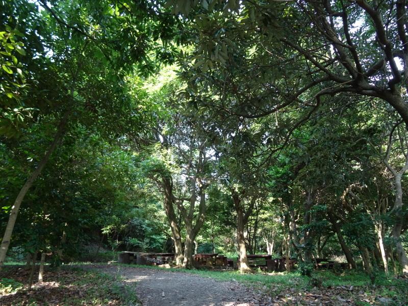 猛暑日は作業にならない・・・うみべの森_c0108460_16570275.jpg