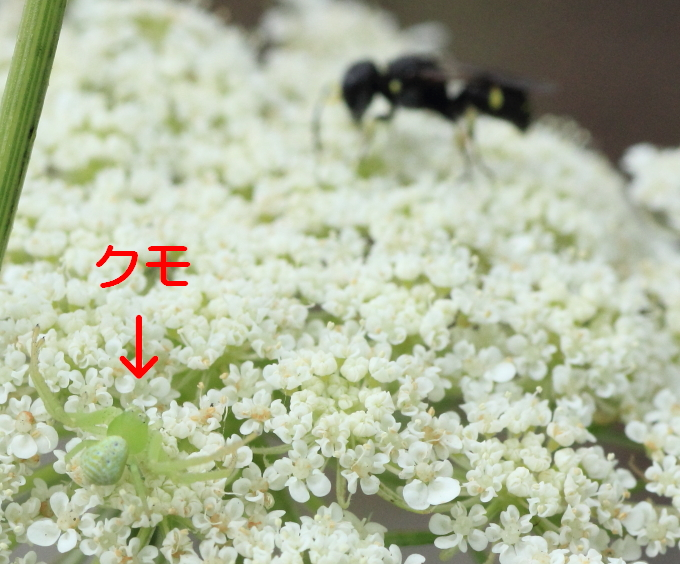 ■■ 河原の白花舞台 ~ 2 ~ ■■_c0195662_22352736.jpg