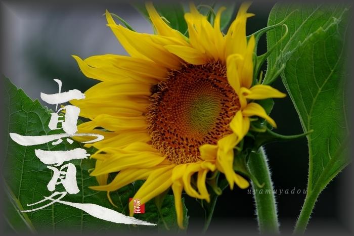 今日も美しく....._a0157263_08491735.jpg