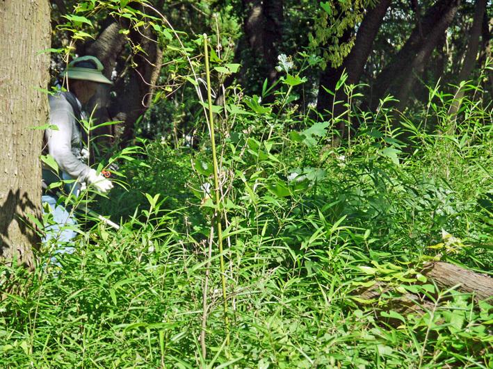 猛暑の中、鎌倉高生3人下草刈りに挑戦7月六国見山定例手入れ_c0014967_10531229.jpg