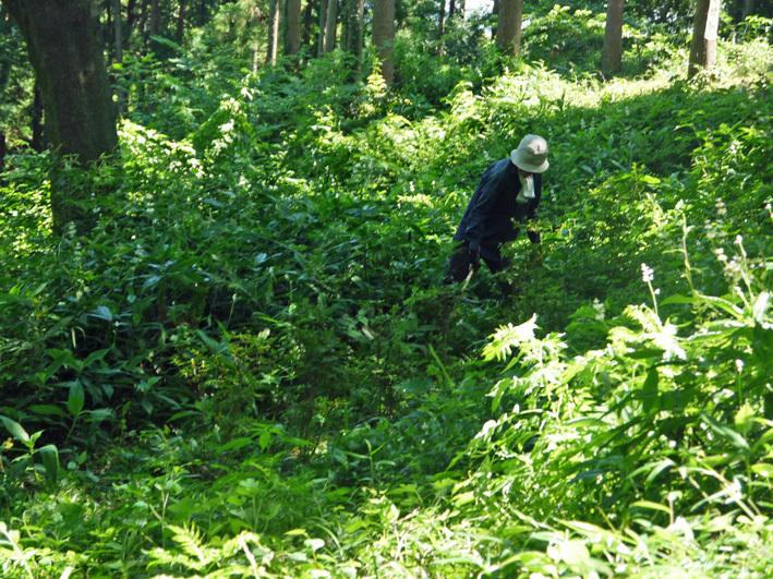 猛暑の中、鎌倉高生3人下草刈りに挑戦7月六国見山定例手入れ_c0014967_10542856.jpg