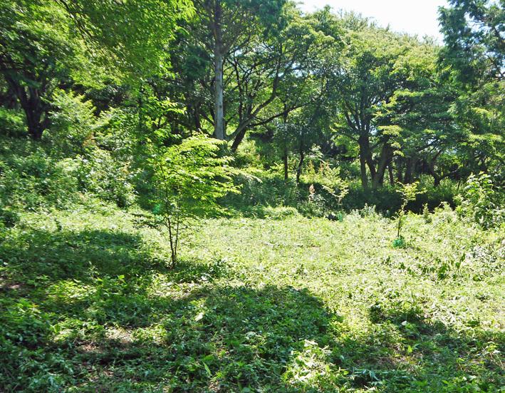 猛暑の中、鎌倉高生3人下草刈りに挑戦7月六国見山定例手入れ_c0014967_10544734.jpg