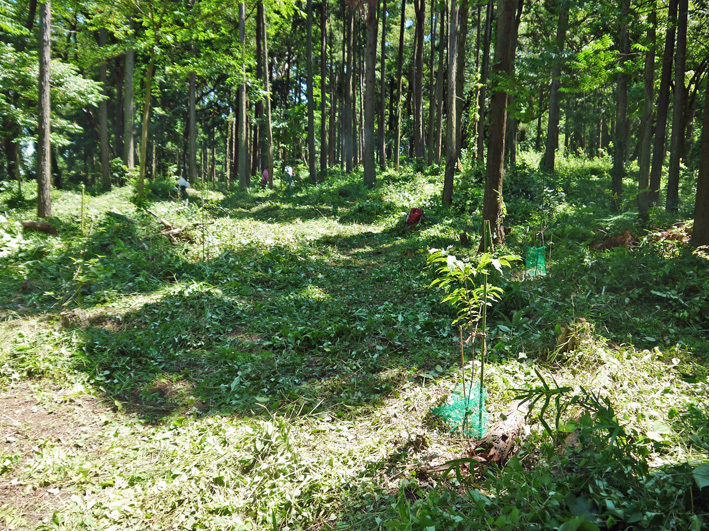 猛暑の中、鎌倉高生3人下草刈りに挑戦7月六国見山定例手入れ_c0014967_10550545.jpg