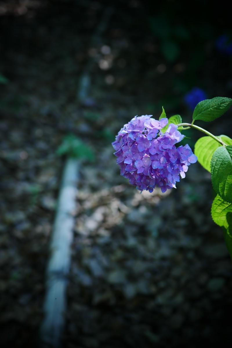 万博記念公園   6/19 紫陽花_f0021869_22284690.jpg