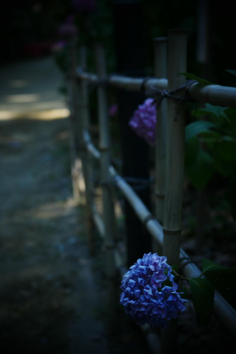 万博記念公園   6/19 紫陽花_f0021869_22310120.jpg