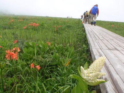 雄国沼・ニッコウキスゲの季節  のはずですが・・・・_a0096989_08255912.jpg