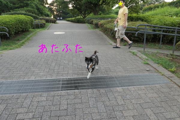 f0369014_16091028.jpg