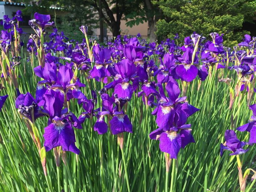 """2017年6月 『初夏、生き物溢れる北大キャンパス』 June 2016 \""""Early Summer, Hokkaido University\""""_c0219616_11190991.jpg"""