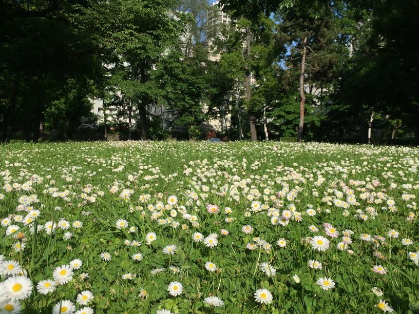 """2017年6月 『初夏、生き物溢れる北大キャンパス』 June 2016 \""""Early Summer, Hokkaido University\""""_c0219616_11191035.jpg"""
