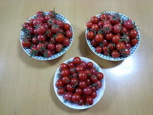 b0138552_20111199.jpg