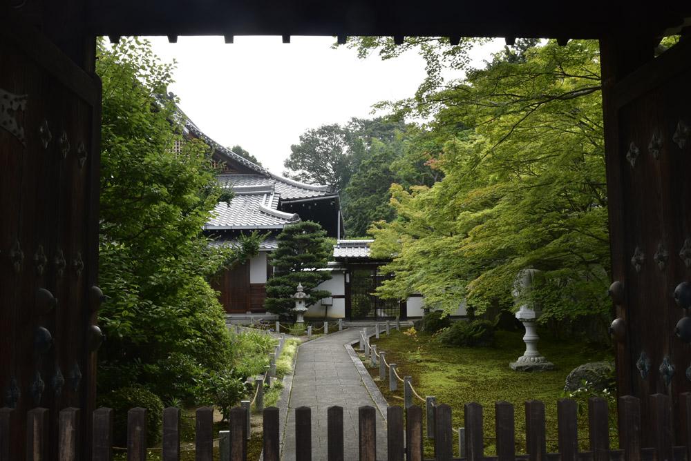 京都の緑_e0367330_20355648.jpg
