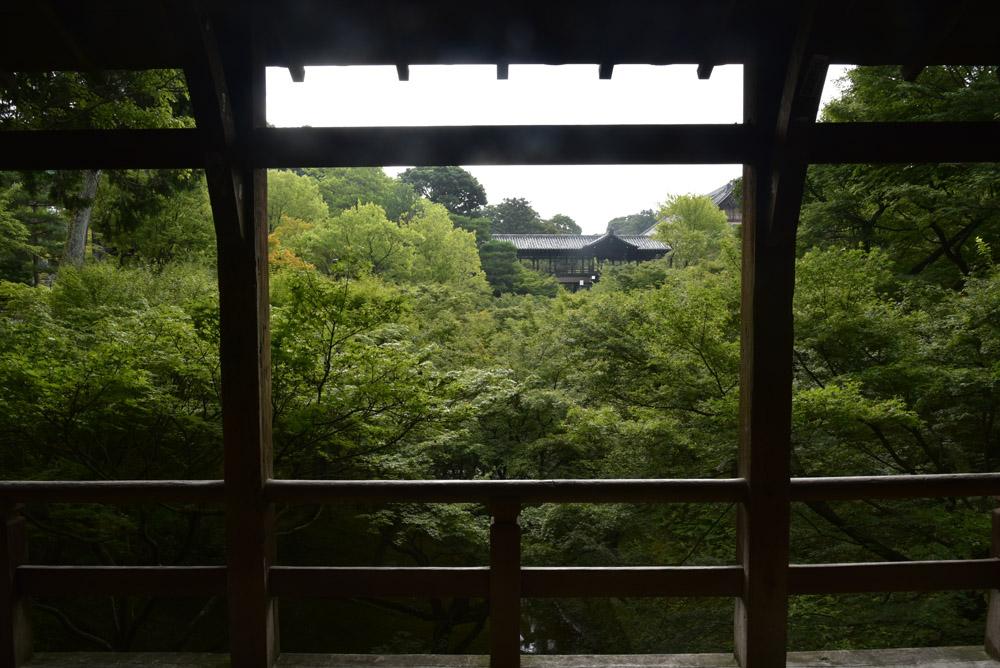 京都の緑_e0367330_20365867.jpg