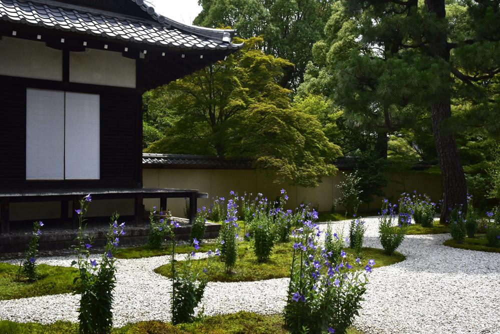 京都の緑_e0367330_20414867.jpg