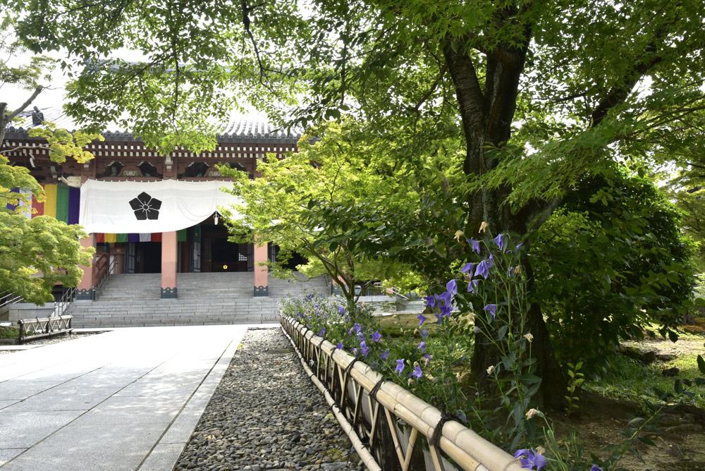 京都の緑_e0367330_2041595.jpg