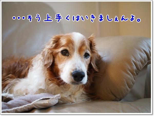 d0013149_23362721.jpg