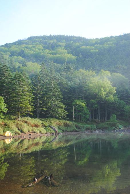 水辺の森_b0194880_22520221.jpg