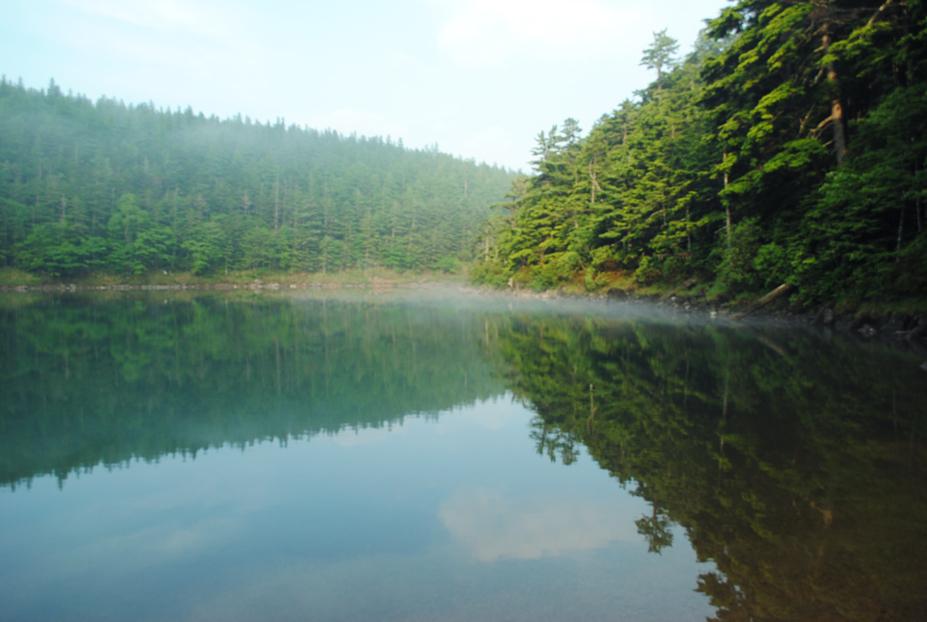 水辺の森_b0194880_22555917.jpg