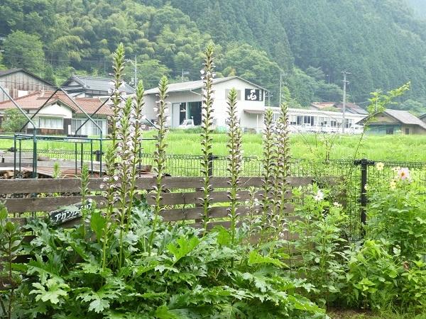 留守、雨、草、密集_e0365880_22262544.jpg