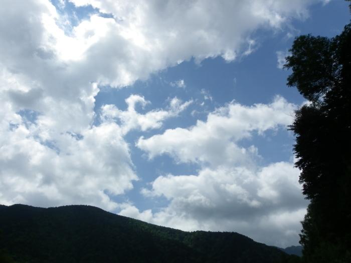 オオイチモンジ 7月18日上高地にて_d0254540_18083473.jpg