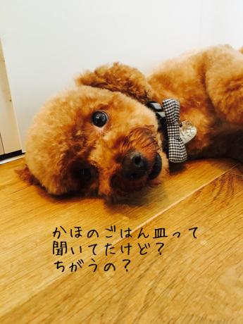 信楽焼_b0370192_19490078.jpg