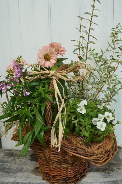 寄せ植えとバラの庭の工事_a0233896_16011073.jpg