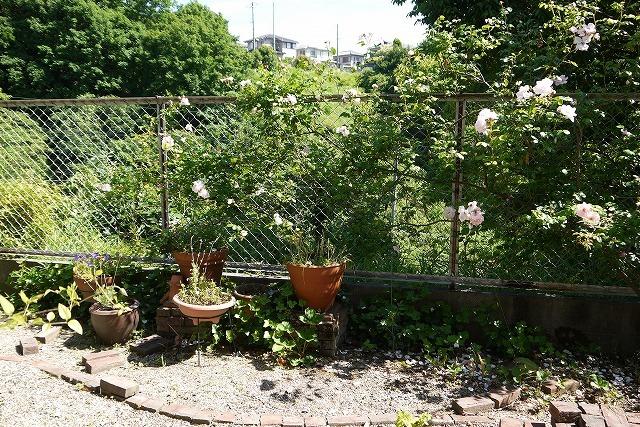 寄せ植えとバラの庭の工事_a0233896_16063727.jpg