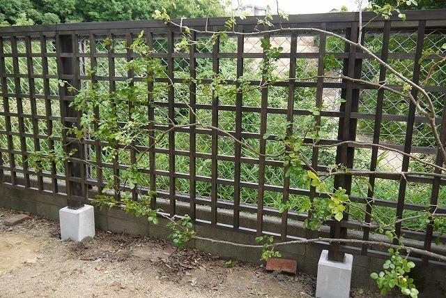 寄せ植えとバラの庭の工事_a0233896_16374153.jpg