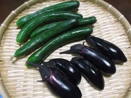 皮から手作り餃子&嫁農園の採りたて野菜をもらう_f0019498_21194844.jpg
