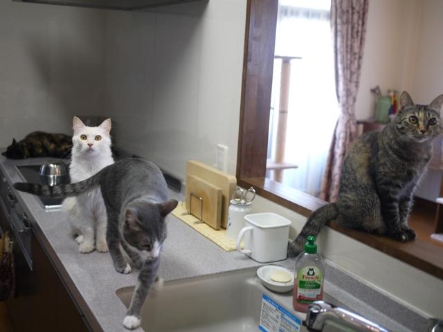 猫のお留守番 ワサビちゃん天ちゃん麦くん茶くん編。_a0143140_18534562.jpg