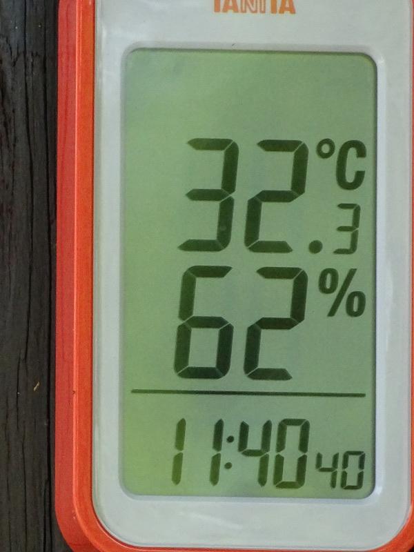 暑過ぎて作業にならない・・・うみべの森_c0108460_15351839.jpg