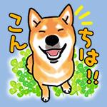烏骨鶏伊佐蔵_b0057675_10204411.jpg