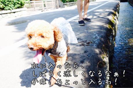 b0370192_15125004.jpg