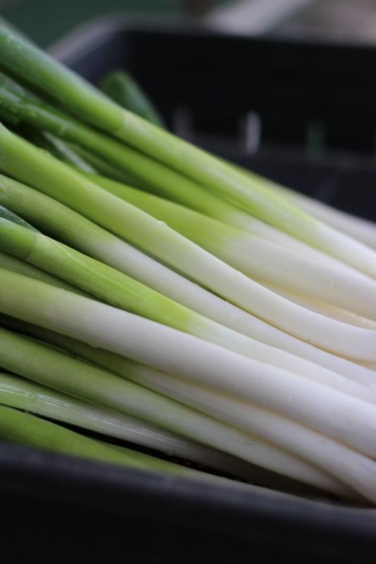 第3826回 野菜の日。_f0366424_16532603.jpg