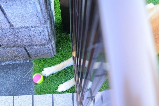 ヒトコマ写真(55)_e0365036_09592852.jpg