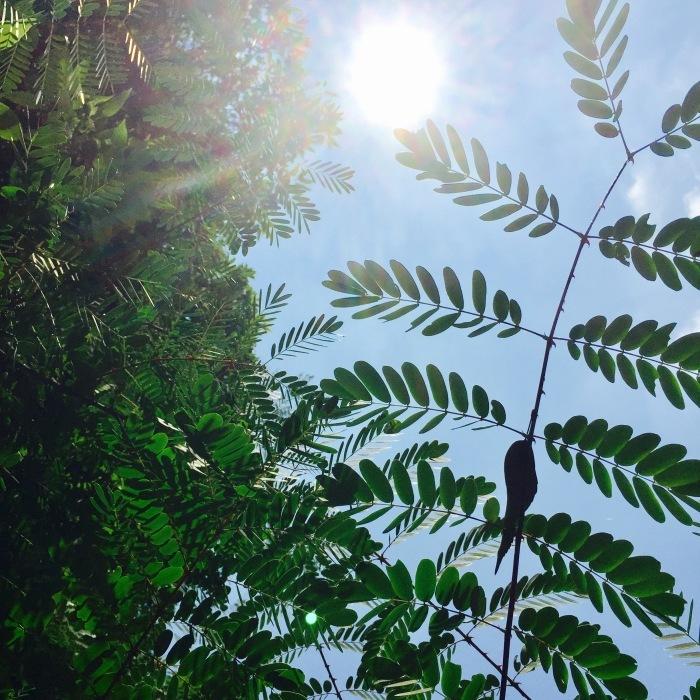 The sun is shinening   深呼吸とオアシス。_d0105967_08515628.jpg