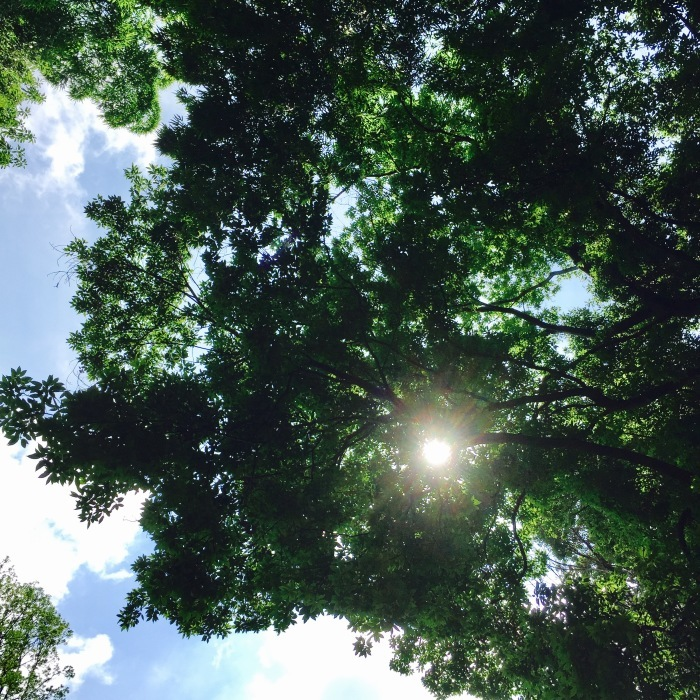 The sun is shinening   深呼吸とオアシス。_d0105967_08531962.jpg