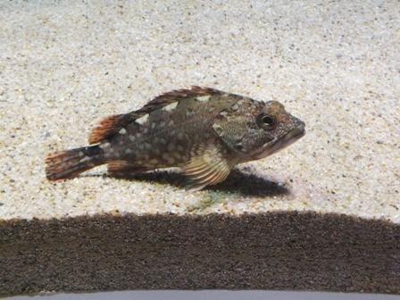 水族館に行ってきました_b0214473_19404543.jpg