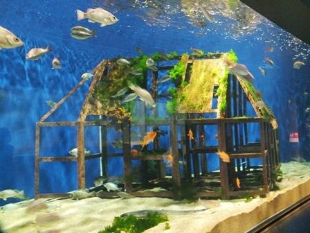 水族館に行ってきました_b0214473_19431164.jpg